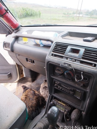 2014_Chickens in the car