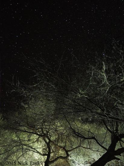 2015_Trees meeting stars at camp