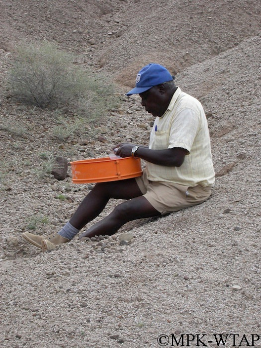 Kamoya Kimeu at the sieve searching for finds