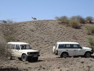 Turkana wildlife