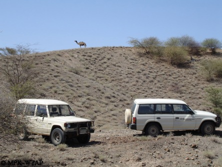 Turkana wildlife