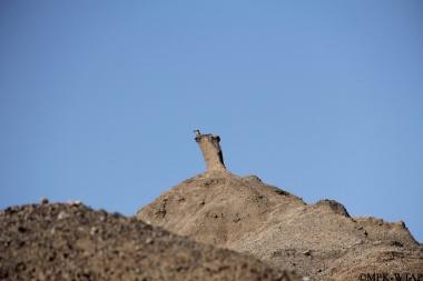 2012_A sediment pedestal