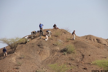 2012_Excavating an Elephant skeleton