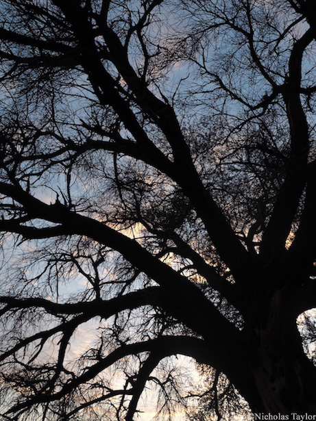 2016_A tree in silhouette