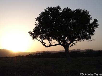 2016_Sunset silhouette
