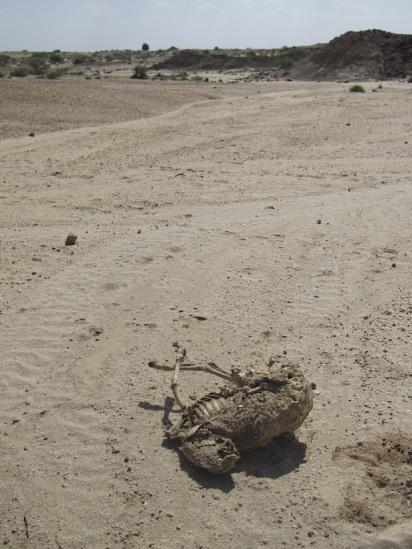 Deserts. Very dry