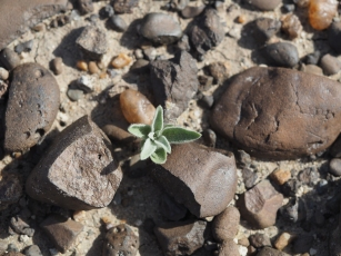Life sprouts among burned surface rocks