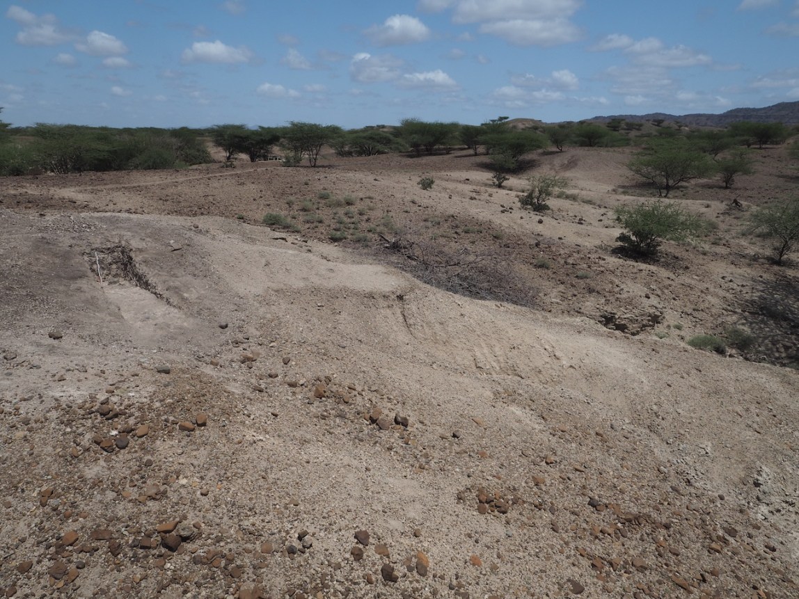 A test pit revealing Acheulean tools at Nadung'a